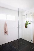 Minimalist white shower area with black floor tiles, glass partition and decorative house plant