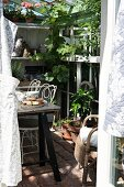 Breakfast table in front of shelves of potted plants in sunny greenhouse