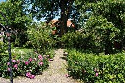 Kiesweg in sommerlichem Garten, mit blühenden Pfingstrosen
