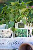 Potted herbs and paper bags of seeds in white wooden crate