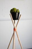 DIY plant stand made from wooden canes tied with cord