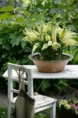 Bouquet of white lupin in ceramic bowl on white wooden table next to chair in garden