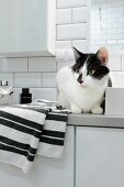 Cat sitting on towel on white bathroom cabinet in tiled, modern bathroom