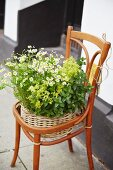 An old chair being used as a plant stand with a wicker planter of herbs and flowers