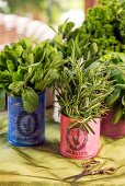 Kitchen herbs in tin cans covered in colourful paper