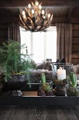Various planters and candle lantern on tray: light fitting made from antlers in background