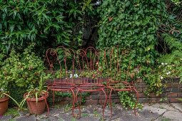 Three antique metal chairs arranged in front of climber-covered garden wall