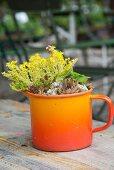 Gelb blühende Pflanze und Sukkulente in Vintage, orangefarbener Emailletasse