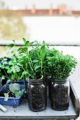 Herbs planted in mason jars on potting bench