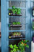 Plastic bottles upcycled into decorative hanging planter