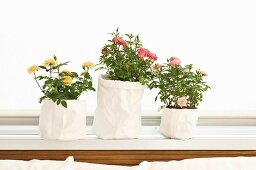 DIY planters - potted roses in white fabric bags
