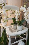 White wooden chair surrounded by white orchids in corner