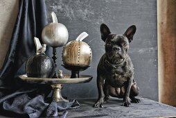 Pumpkins painted with shiny metallic paints on dishes guarded by French bulldog