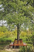 Wooden bench encircling tree trunk in summery garden