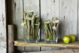 Japanese knotweed stems and ox-eye daisies in square glass vases