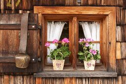 Geraniums in paper bags on windowsill and cowbell hanging from shutter