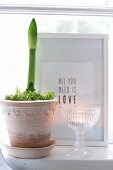 Amaryllis in decorative pot next to tealight in vintage glass bowl and in front of framed motto