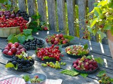 Variety of berries in small cake tins: blackberries, raspberries, redcurrants, blackcurrants and red and green gooseberries