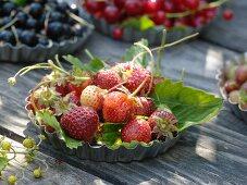 Frisch gepflückte Erdbeeren in Kuchenform