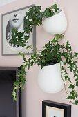 Grünpflanzen in weissen Übertöpfen an rosa getönter Wand aufgehängt