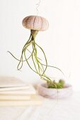 Ornamental jellyfish made from air plant planted upside down in sea urchin test