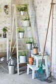 Plants in zinc pots on stepladder and gardening utensils in vintage interior