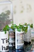 Young plants in newspaper pots on tray