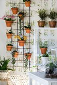 Plants in terracotta pots on rebar grid against wallpaper with botanical motif