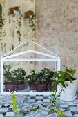 White terrarium and house plant in vintage-style interior