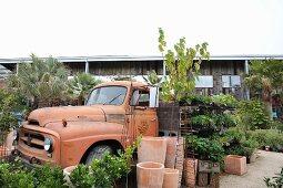 Vintage Pritschenwagen mit Pflanzen beladen, davor Blumentöpfe
