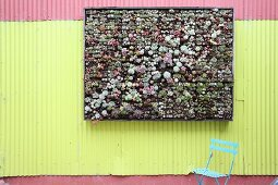 Vertical garden planted with succulents on corrugated metal wall