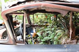 Vintage car used as container garden