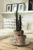 Cacti in terracotta pots in front of cactus-patterned cushion
