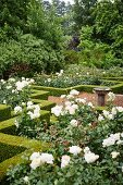 Rose beds in landscaped garden with clipped hedges