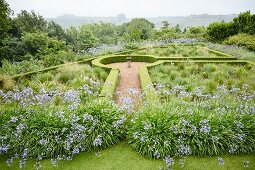 Beds of agapanthus and clipped hedges in geometric garden with view of landscape