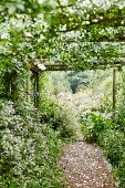 Climber-covered wooden pergola and gravel path lined with plants in garden