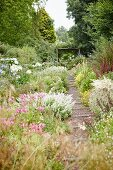 Gravel garden path with wooden steps leading through flowering herbaceous borders