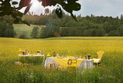 Set table in field of flowering rapeseed