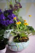 Yellow ranunculus planted in painted ornamental egg