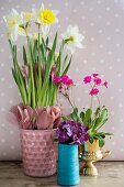 Narcissus and feathers in pink pot and pink and purple flowers in various containers