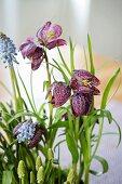 Snake's head fritillaries and grape hyacinths