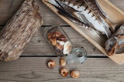 Sill-life arrangement of collected natural materials on rustic wooden surface