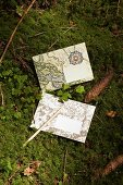 Enveloped with map motifs and fir cones on mossy ground