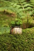 Wood sorrel planted in old vase covered with map