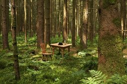 Simple, rustic, wooden table and chairs in woodland clearing