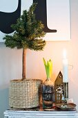 Wintry still-life arrangement of small Christmas tree in seagrass basket