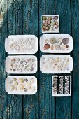 Various seashells and snail shells in white dishes