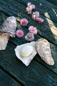 Oyster shell repurposed as soap dish