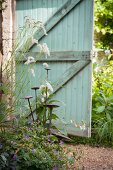 Plant supports amongst flowering plants in front of turquoise wooden gate in garden