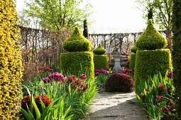 Topiary and tulips surrounded by hornbeam hedge